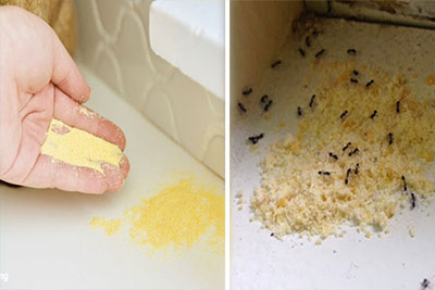 Control ants 10 simple steps to get rid of ants and keep them away from the house