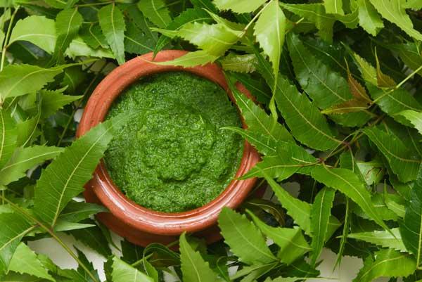 neem leaves paste for acne