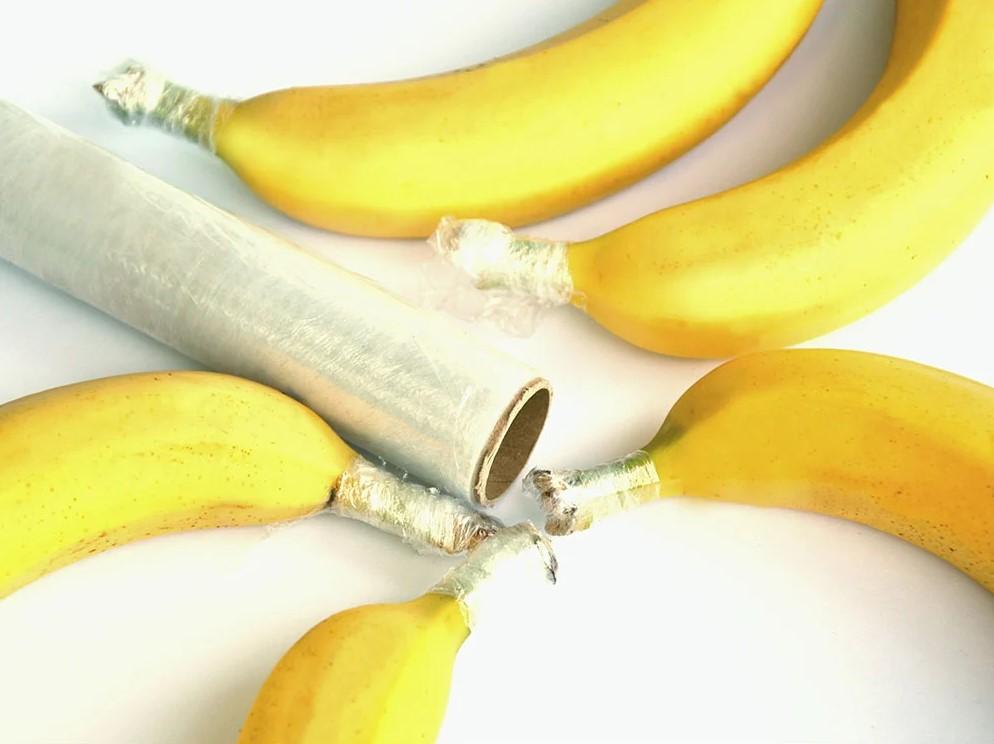 life of bananas